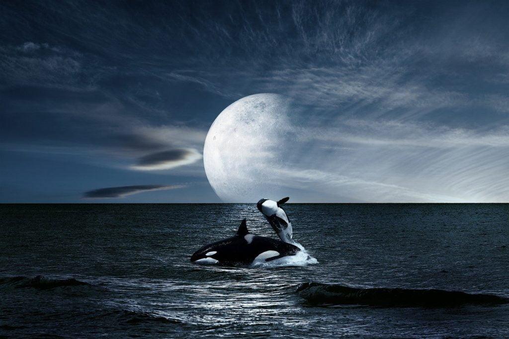 landscape, sea, whales